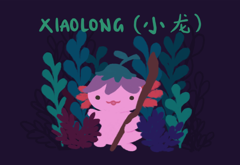 Text: Xiaolong (小龙). Image: Xiaolong, a pink axolotl wearing an upside down purple flower 'hat', carrying a staff, standing in front of plants.