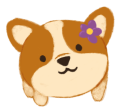 Bao, the brown round corgi with a purple flower on her ear, titling her head and looking at you.
